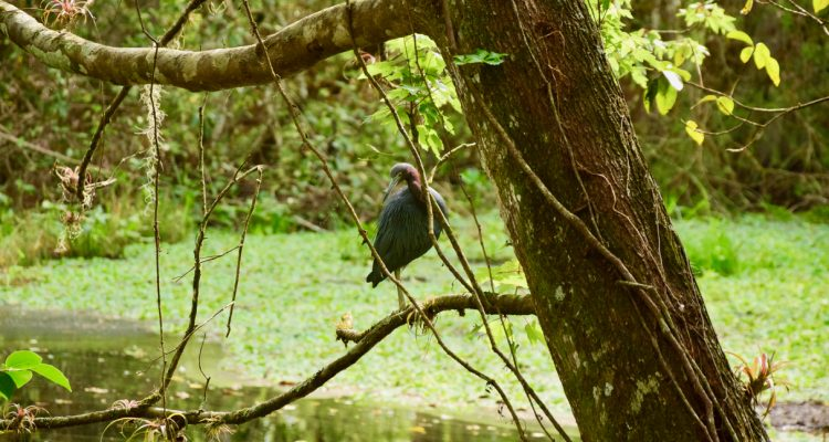 florida-Corkscrew-Swamp-Sanctuary